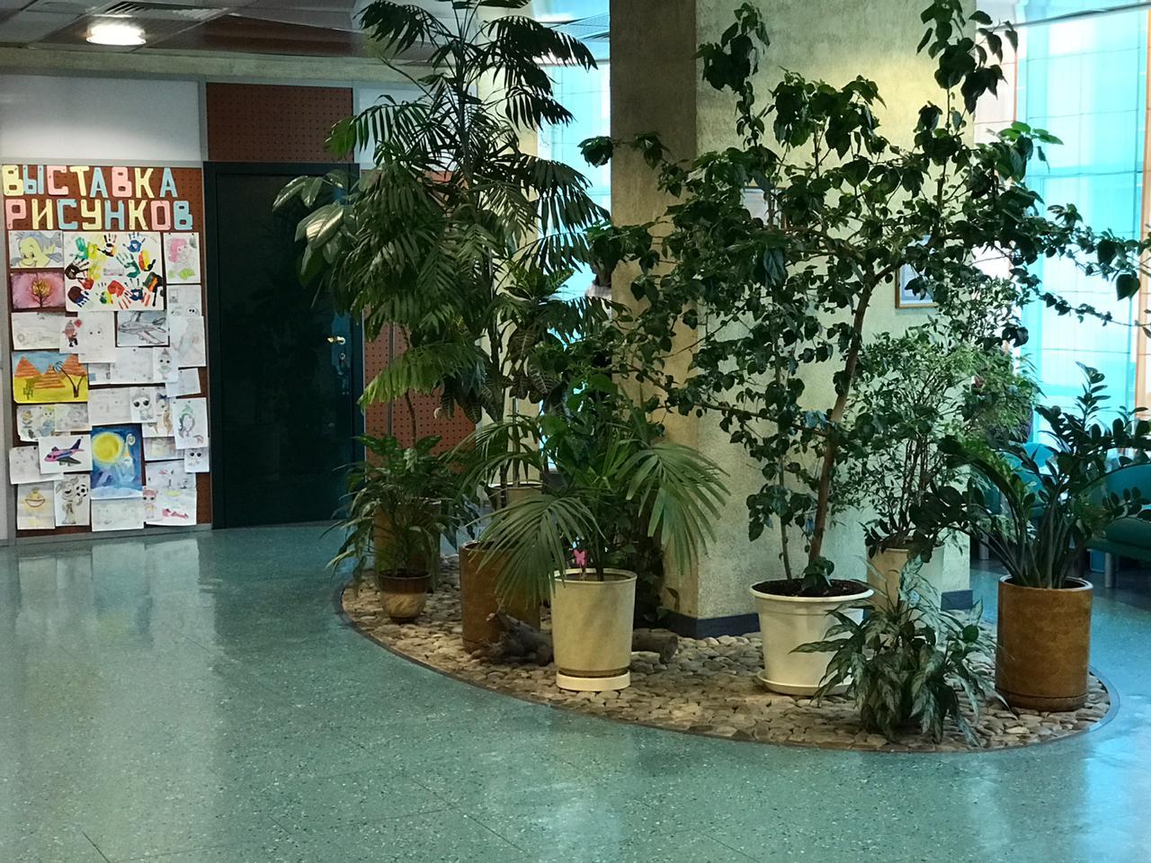 Зеленый уголок с растениями
